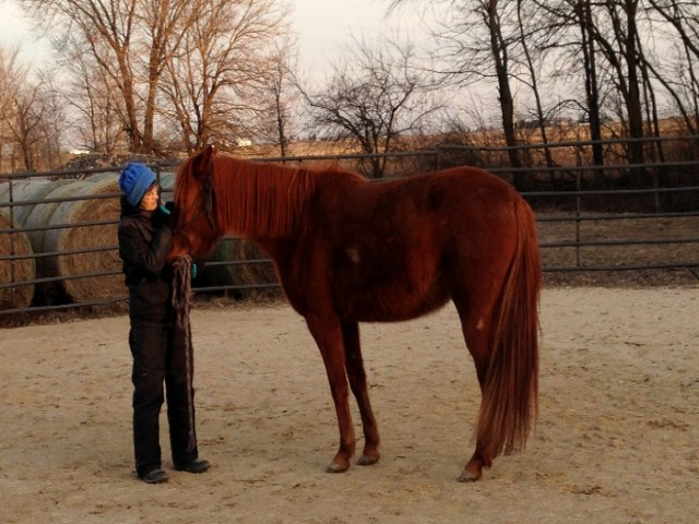 search and rescue horse