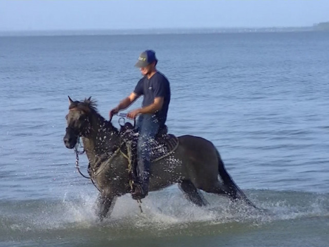 zeus runnin in water.