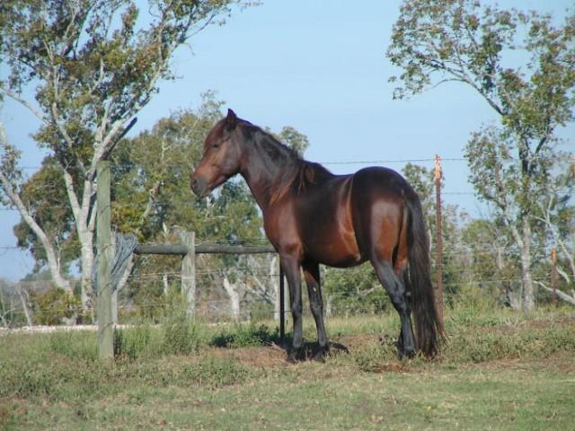 keith andries horsemanship