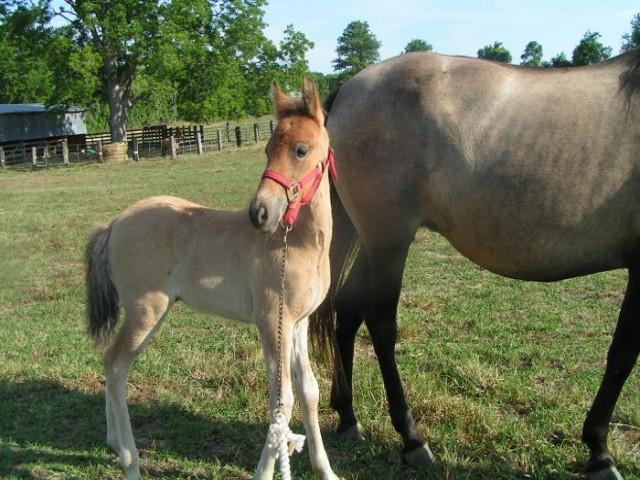 horse trainer