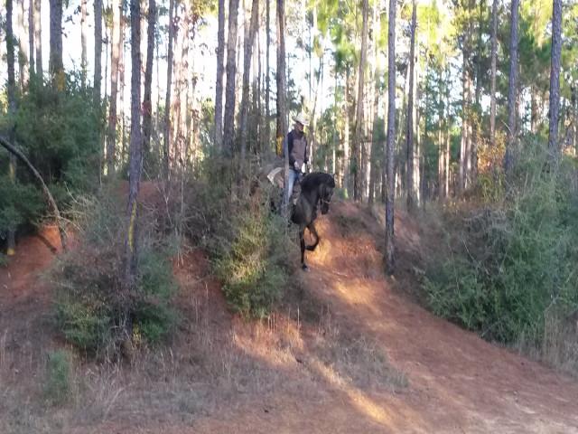 rulla aso fino endurance horse downhill.