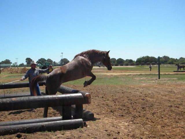 horse trainer texas