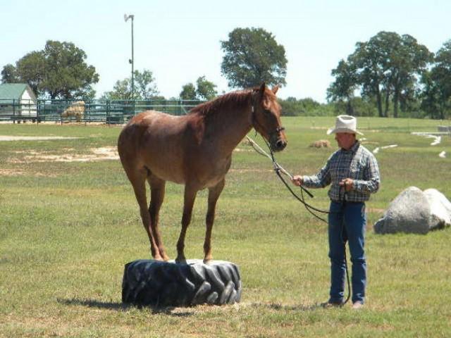 natural horsemanship clinics