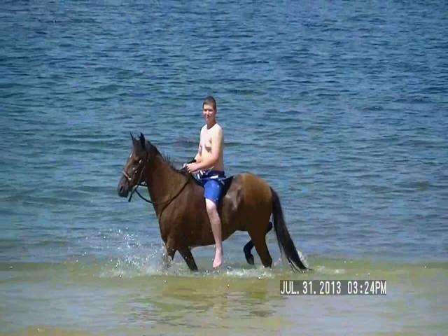 eruvian mare for sale2.