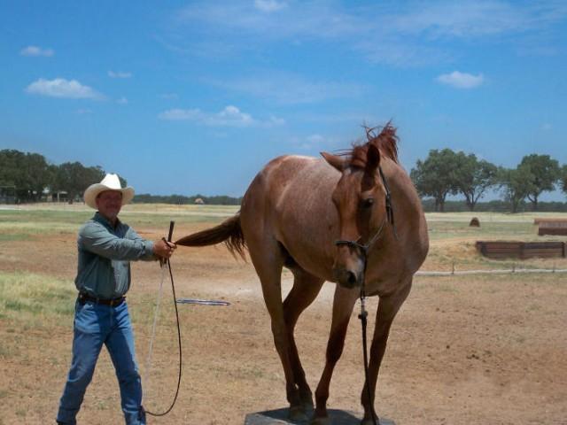 safe beinner horse